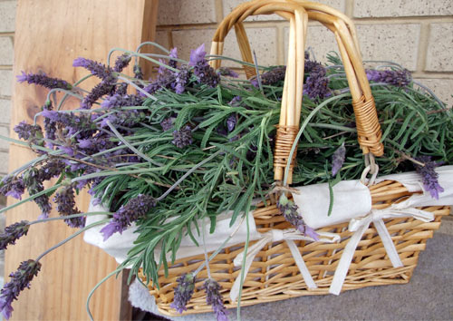 Gardening Book Giveaway: Herb Gardening, from Better Homes & Gardens