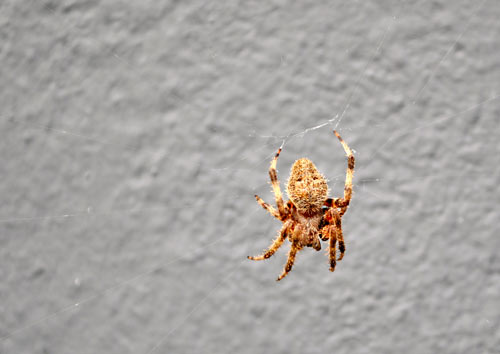 Eeeek! Spiders In The House…