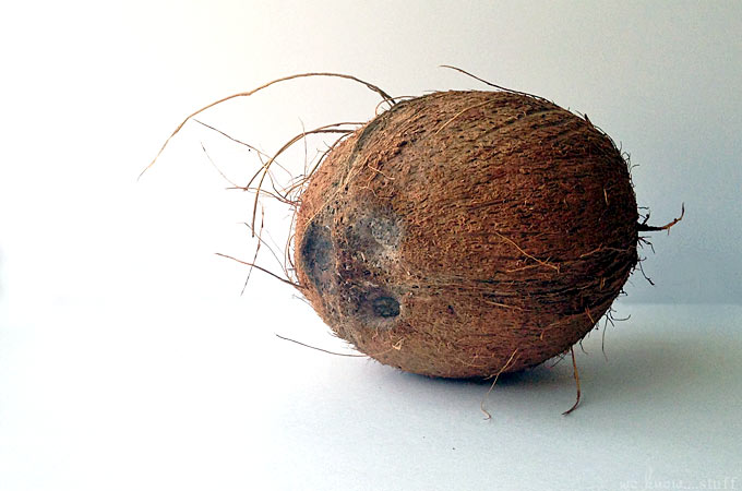 the acceptibility of coconut shell as