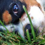 wks_target_puppy1