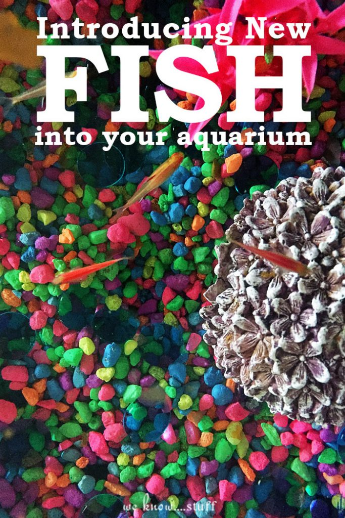 Tips for introducing new fish into your family 39 s aquarium for How to reseal a fish tank