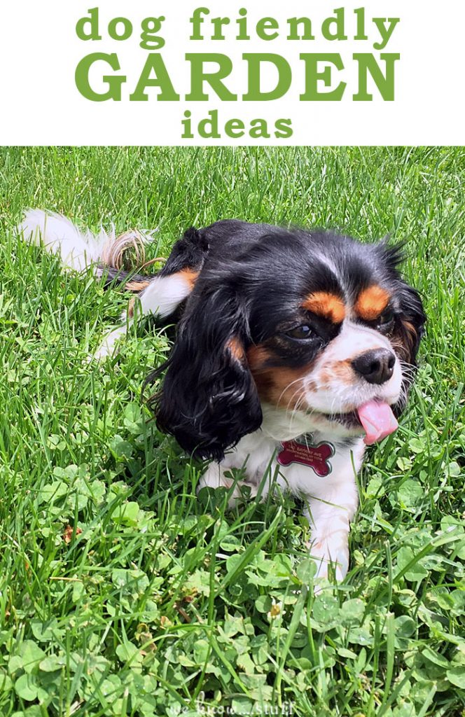 Best Dog Friendly Bushes