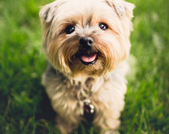 Table Scraps For Dogs: BBQ Dos and Don'ts