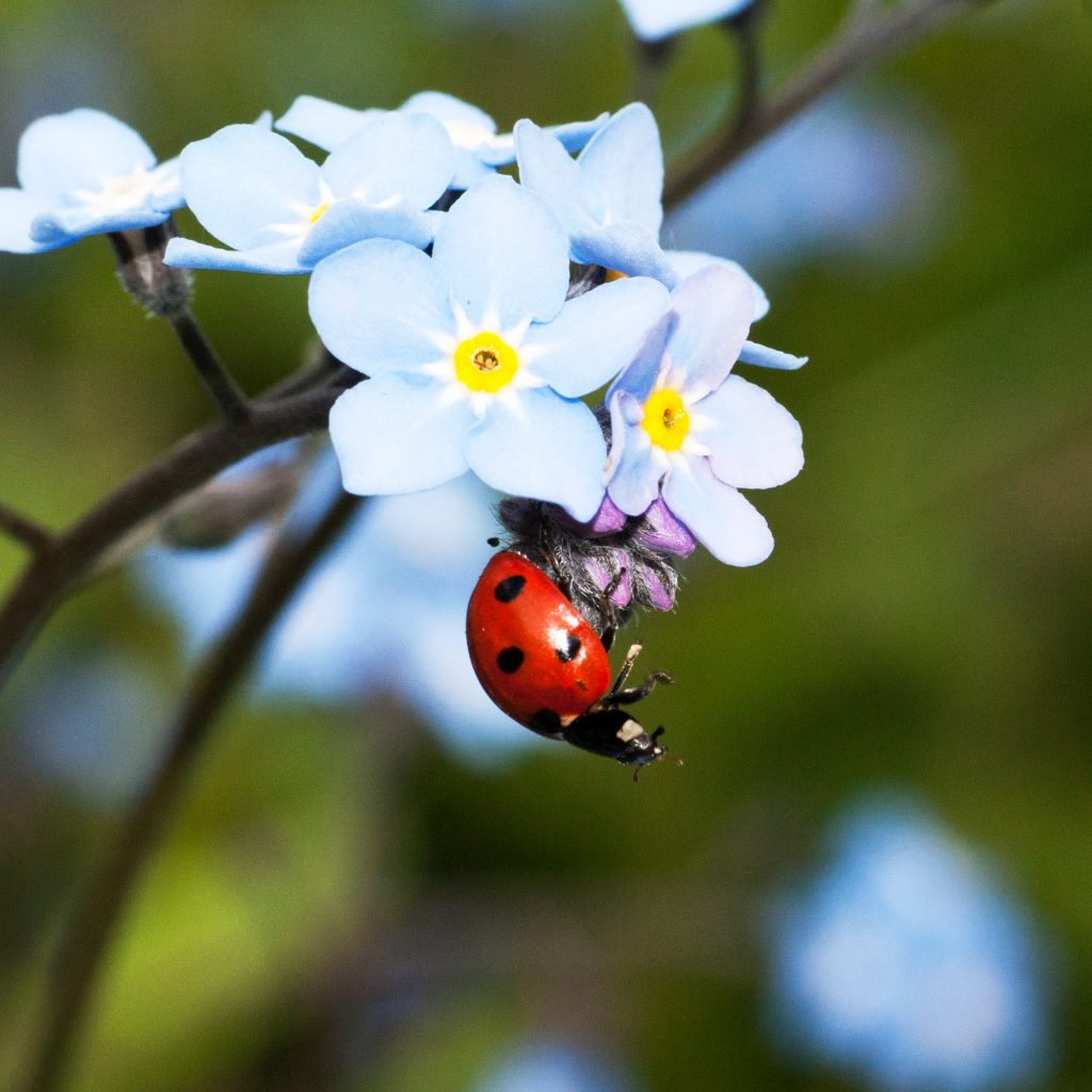 Regardless of the size of your garden, encouraging beneficial insects to call it their home is relatively easy to do, especially since many of them already reside there. To learn how to attract beneficial insects to your yard, read this article! Photo by Janice Gill on Unsplash
