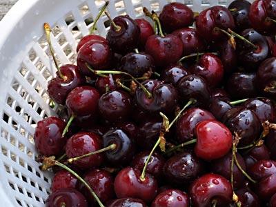 Bing Cherry Ice Cream, http://www.weknowstuff.us.com/
