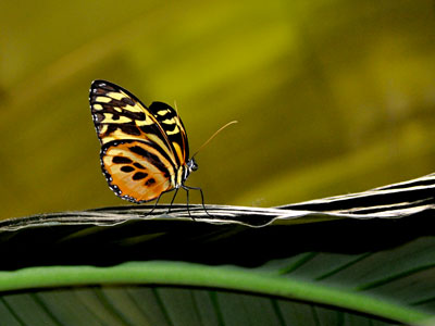 The American Museum of Natural History, The Butterfly Conservatory, www.weknowstuff.us.com