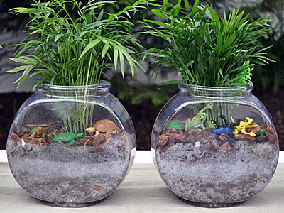 http://www.weknowstuff.us.com Fish Bowl Terrariums