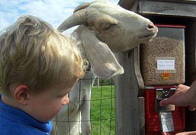 Harbes Farm & Orchard: Corn Maze Fun