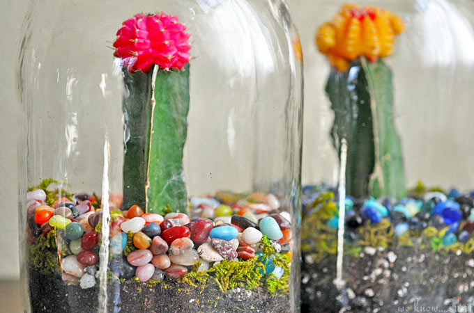 This simple terrarium project is a fun DIY kid's craft using mason jars and mini cactuses.