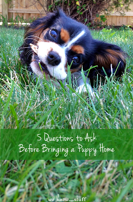 Getting a new puppy is a pretty big deal! Here are 5 Questions to ask yourself before bringing a puppy home to your family. #2 is often overlooked!