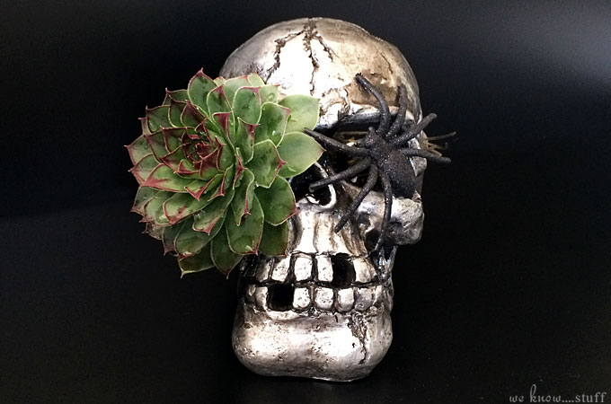 This Skull Planter is an unusual way to add a creepy element to your home for Halloween or any time of the year really. Succulents work best for this craft.