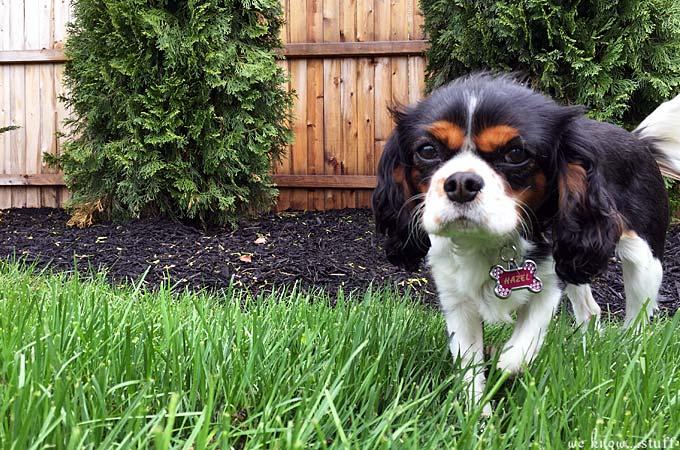Dog Friendly Garden Ideas - we know stuff