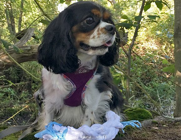 Make Your Own Dog Toy With Old T-Shirts
