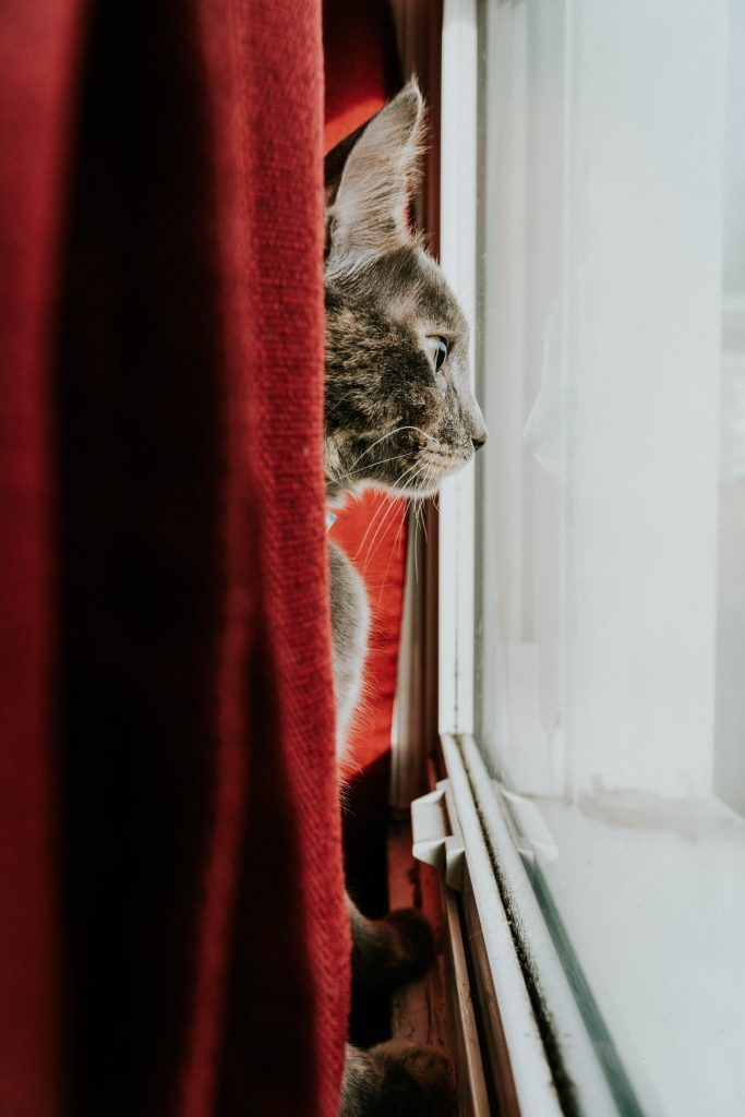Our friends at Healthy Paws Pet Insurancegave us some tips on How To Pet Proof Your Home For The Holidays and keep your pets safe this holiday season. Photo by Hermes Rivera on Unsplash