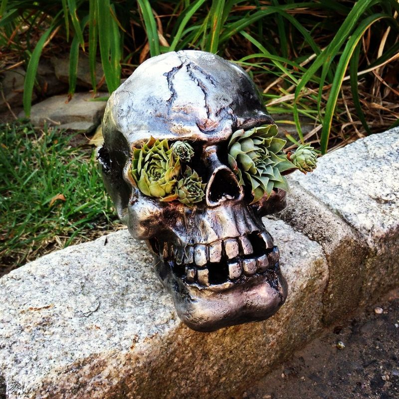 "Skull Succulent Planter, My son recently banished all of my ""cute"" decorations, so this post is full of creepy and scary DIY Halloween Decorations for boys...though girls will love them too!"